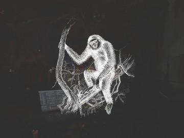 バリバイの手長猿